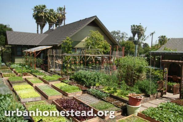 Usa une famille fait pousser 3 tonnes de nourriture bio for Avoir une poule dans son jardin