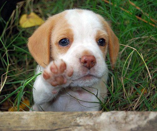 cute puppieee