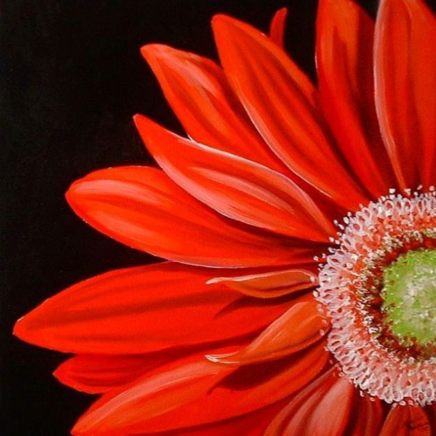 Painting Of A Gerbera Daisy With Images Daisy Painting Black