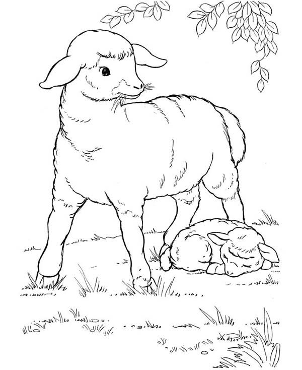Farm Animal Sheep And Her Baby Rest Under The Tree In Coloring