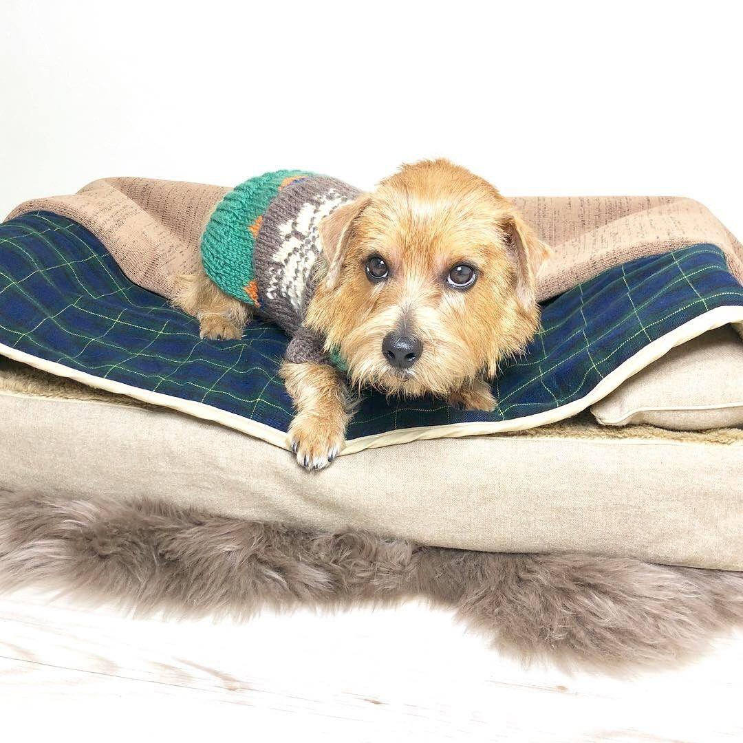 床暖房するとベッドの間も暖かいよ ベッドの上と間を行ったり来たりして温度調整するメンちゃん 皆さまワンちゃんニャンちゃんと素敵な連休を 犬 大型犬 小型犬