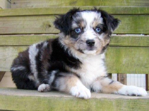 Wyatt Got His Puppy Puppies Adult Dogs Animals