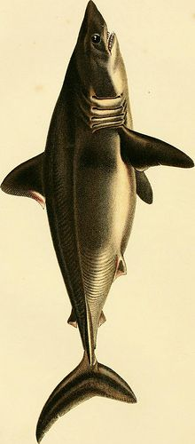 "cool Image from page 672 of ""The game birds and wild fowl of Sweden and Norway; with an account of the seals and salt-water fishes of those countries .."" (1867)"