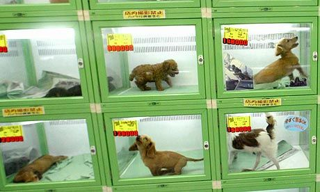 Exactly where do pet shops and online breeders get their