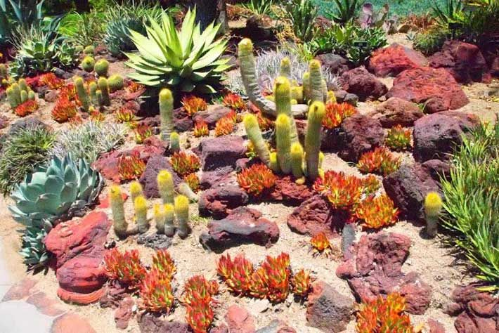 Desert Garden Ideas designing desert water gardens ideas for desert landscaping project in your home drought desert scaping pinterest Huntington Desert Garden Decoration Ideas Los Angeles With Excellent Rock Desert Garden Plants