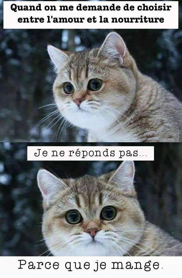 Blague De Chat Drôle   Humourew