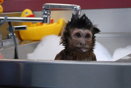 The Cutest Baby Apes You Have Ever Seen Schimpanse Susseste