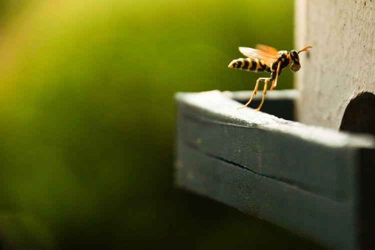 Wespen Vertreiben Nützliche Hausmittel Für Wespenbekämpfung Und Wespennest Selbst Entfernen Dach Gegenwespen