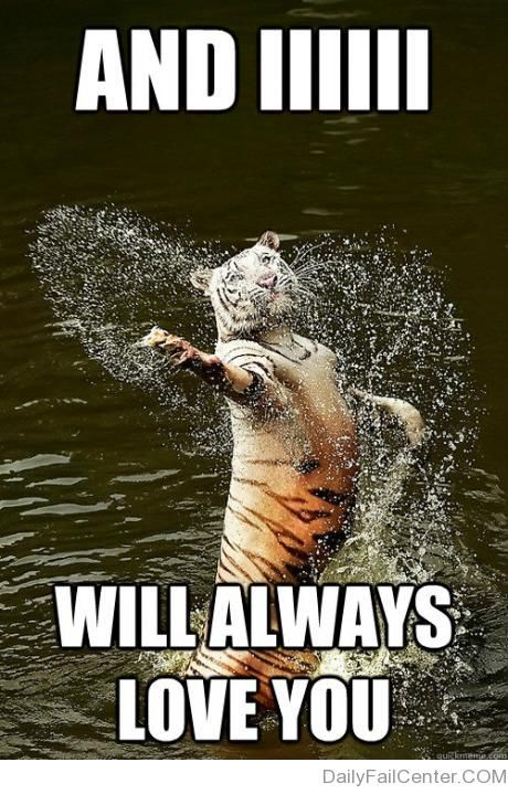 Romantic Water Tiger Animal Captions Funny Animals Funny Animal Memes