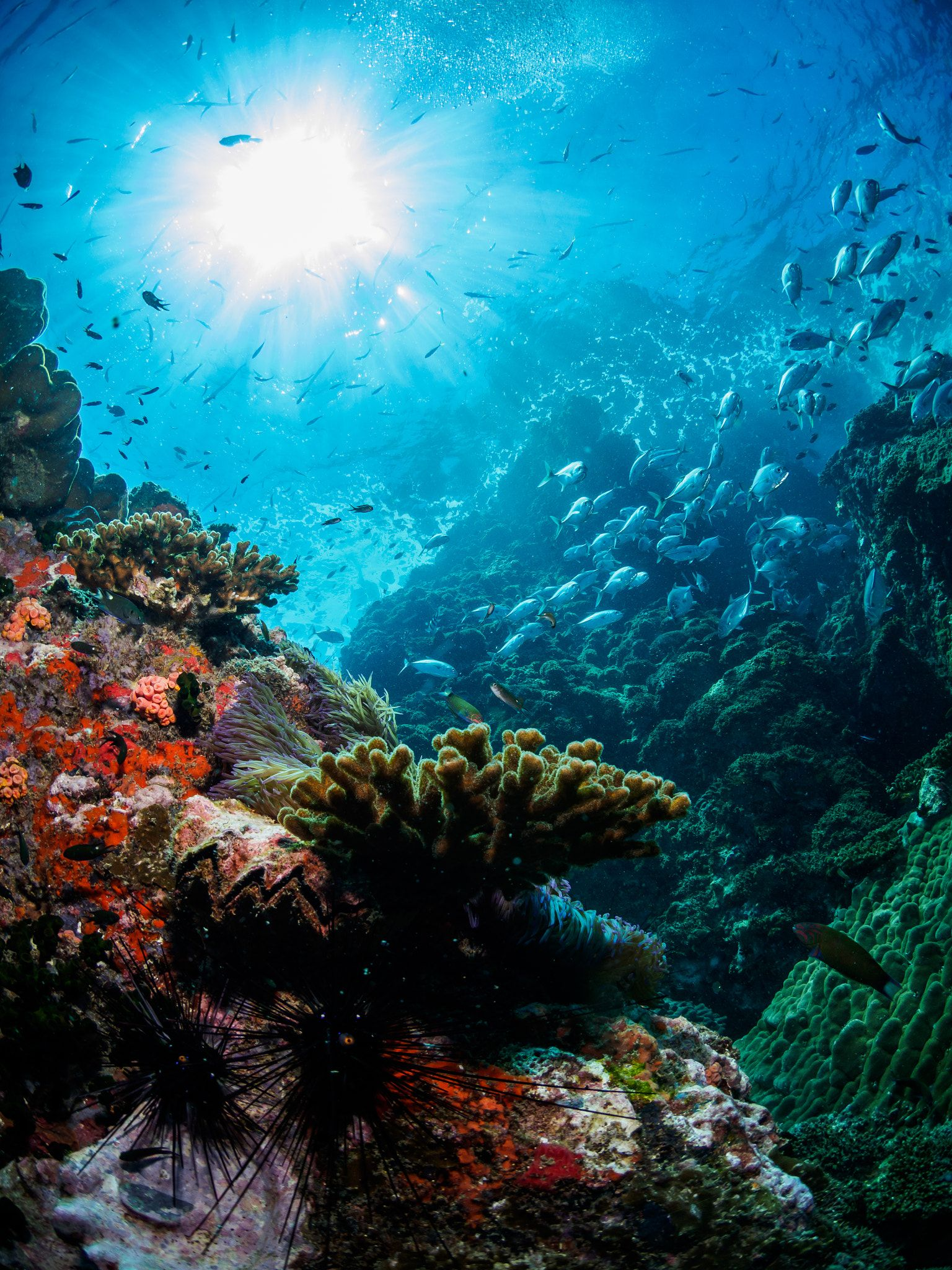 Stairway Sail Rock Thailand By Stefan Follows On 500px Underwater Photography Ocean Ocean Photography Ocean Underwater