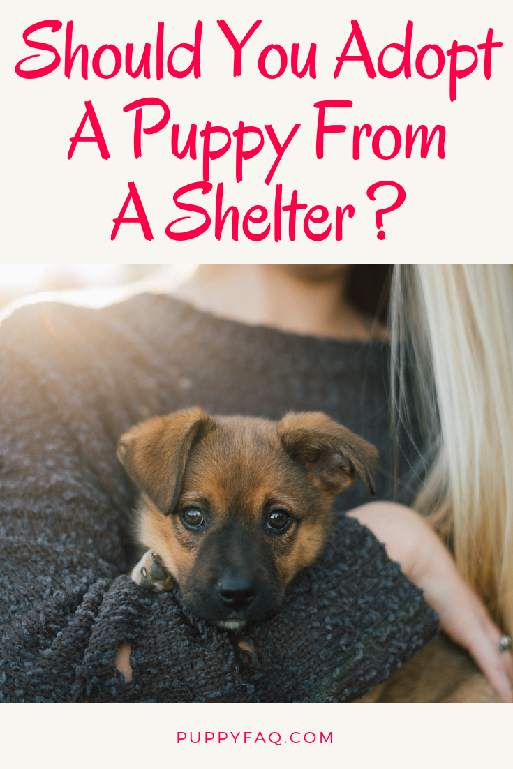 Should You Adopt A Puppy From A Shelter Puppy Adoption Shelter Puppies Rescue Puppies