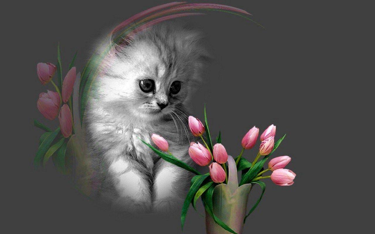 Kittens Wallpaper: Cute Kitten
