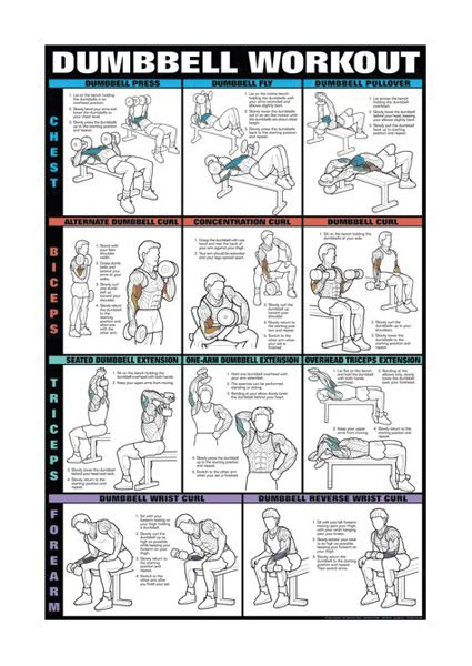 Dumbbells For Arms Dumbbell Workout Dumbell Workout Workout Chart