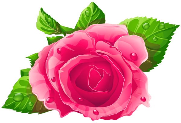 Flower Rose Garden Roses For Valentines Day 5dc234a4c7ec65 67453790 Pixestock C Flowerrosegardenrosesforvalentine In 2020 Flowers Pink Rose Png Flower Illustration