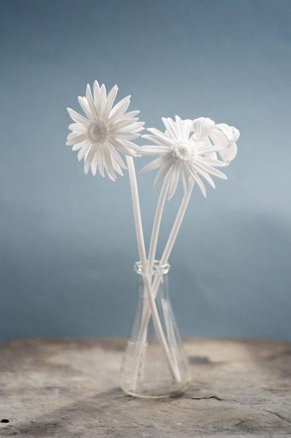 3D Printed Nylon Daisies, Set of 3- Perfect for Display and Gifting - plan de maison moderne 3d