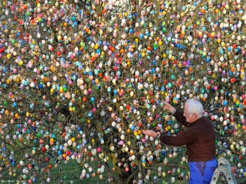 Volker Kraft of Saalfeld, Germany has an Easter egg tree with 10,000 colored eggs