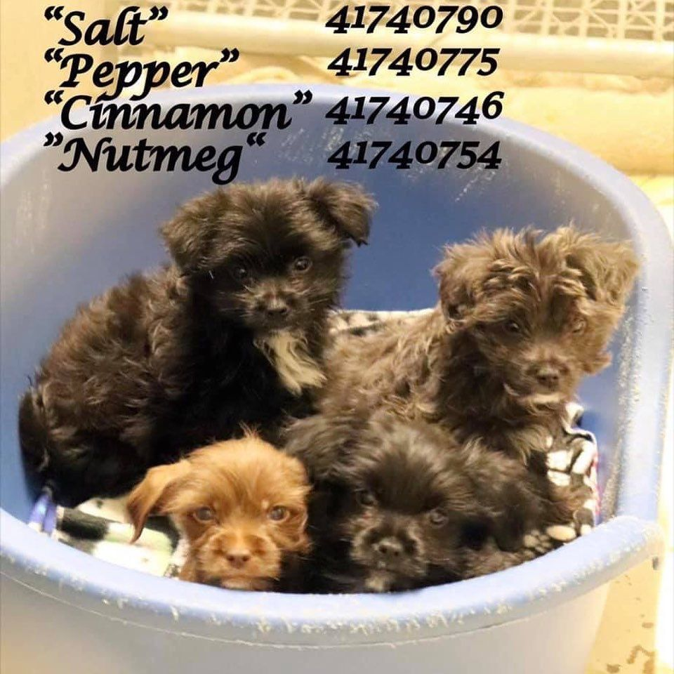 FOSTERS NEEDED🚨 The shelters are literally bursting with