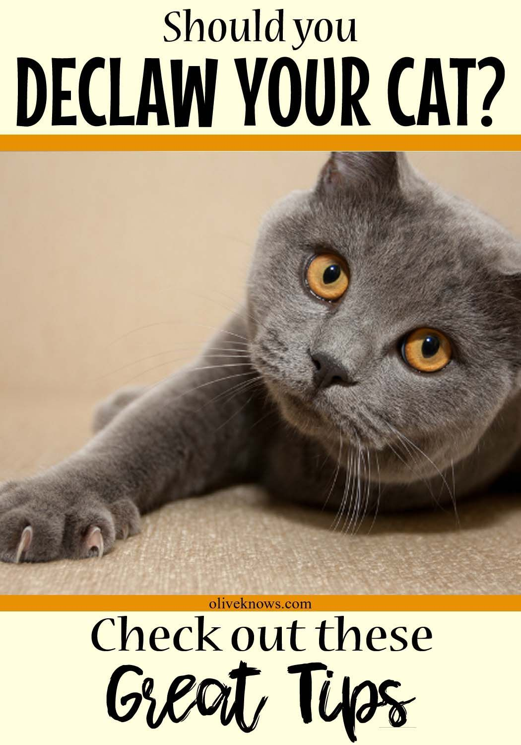 Why You Shouldn't Declaw Your Cat Cats, Cat health