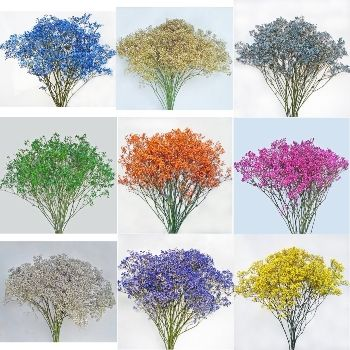 Assorted Tinted Million Star Baby S Breath Babys Breath Baby S Breath Wedding Flowers Babys Breath Bouquet Wedding