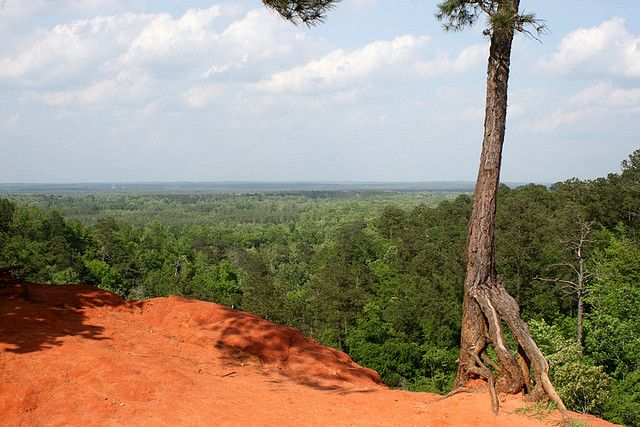 Red Clay And Pine Trees The Dirt Was This Color Where I Grew Up