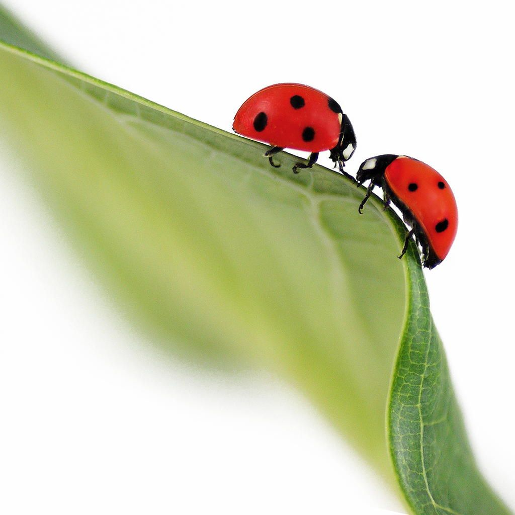 Amazing lady bug and angel wicky having a lesbian experience 8