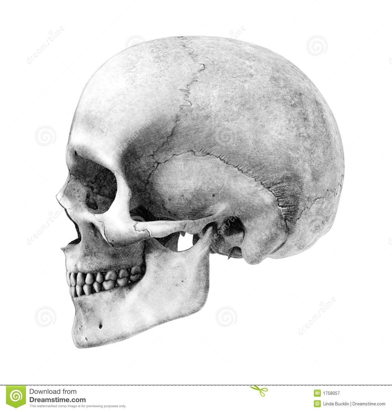 https://www.google.com/blank.html | Bones | Pinterest | Ideen für ...