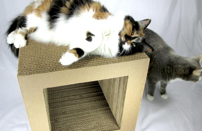 kittyblock