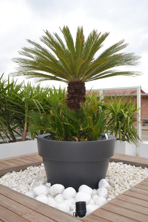 Plaques de schiste espace v g talis sec sur terrasse en for Amenagement jardiniere exterieure