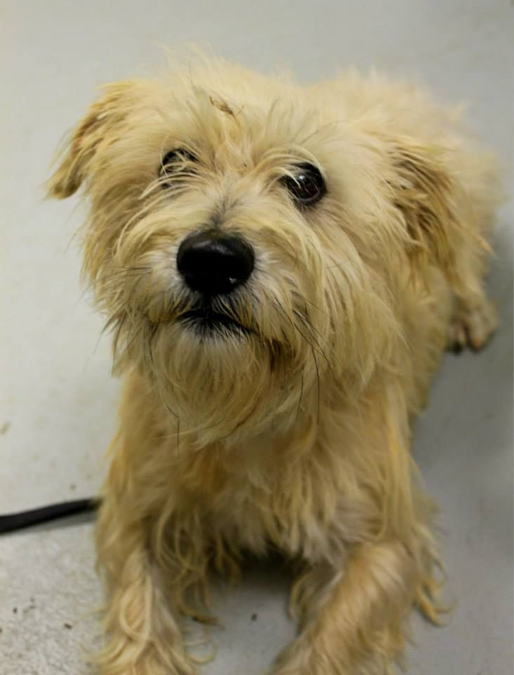 Adopt Kennel 23 on Adoption, Terrier dogs, Pet adoption