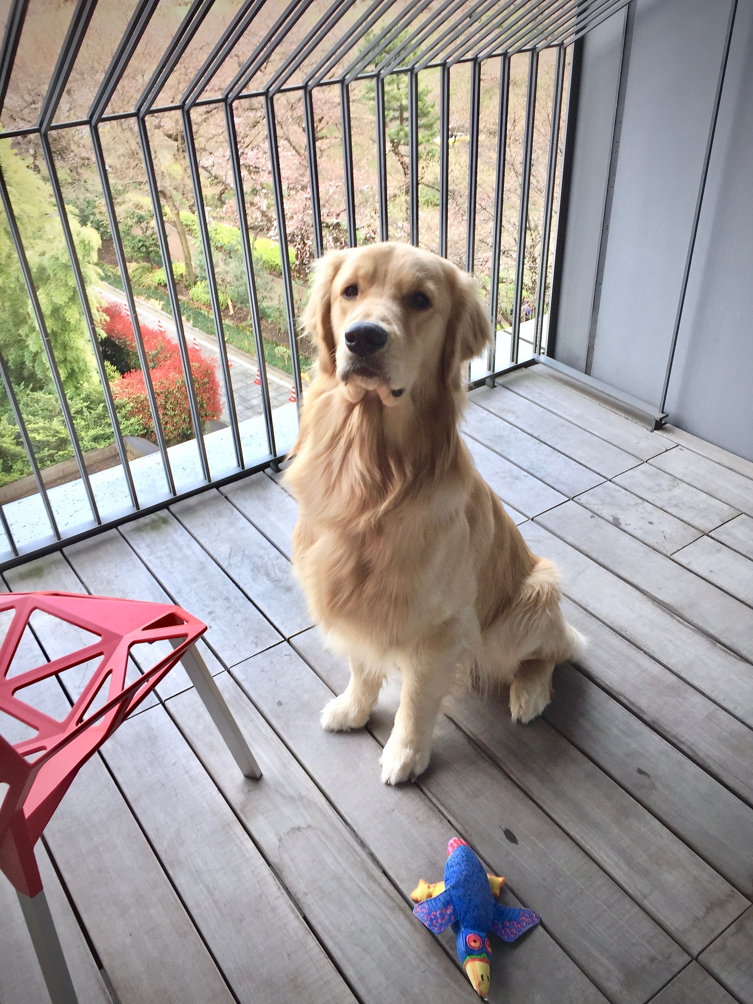 Pin By Leslie Lami On Best Of Friends Golden Dog Dog Pictures Dogs