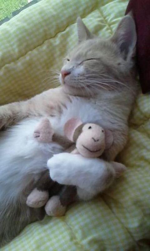 Sweet Dreams Pretty Cats Cats Kittens Cute Animals