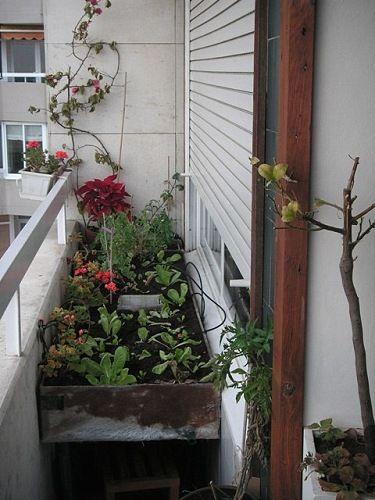 Cómo Montar Un Huerto Urbano Ecológico En Tu Terraza Ecoagricultor Huerto Huerto Ecologico Huerto Urbano