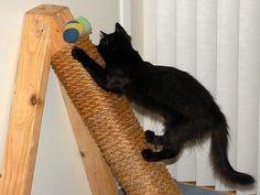Photo of Cómo hacer rascaduras para gatos: paso a paso e ideas – ¡Manualidades paso a paso!