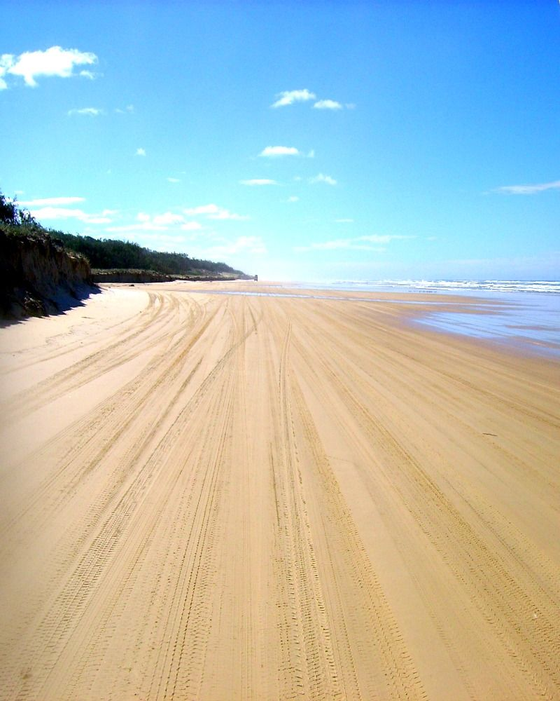 Fraser Island Australia: Fraser Island, Australia From The Back Of A 4x4.