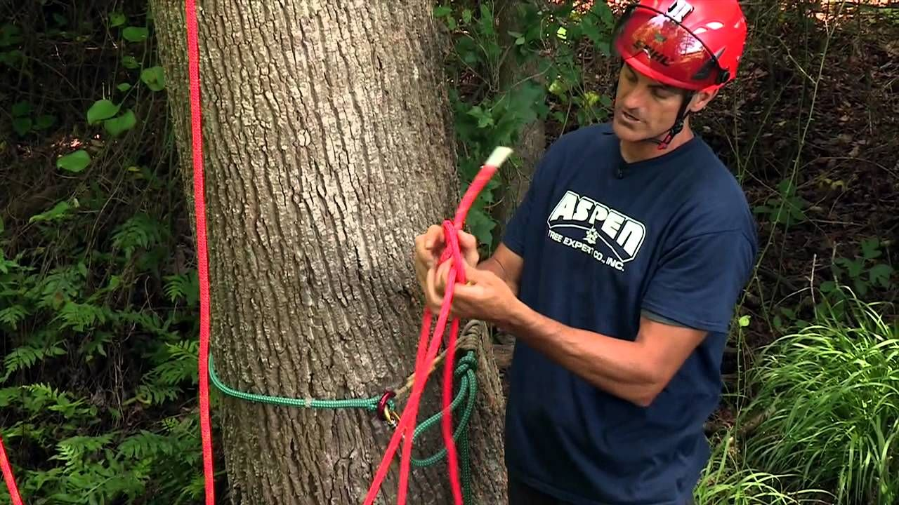 How to rig a tree for ascending tree pruning tree