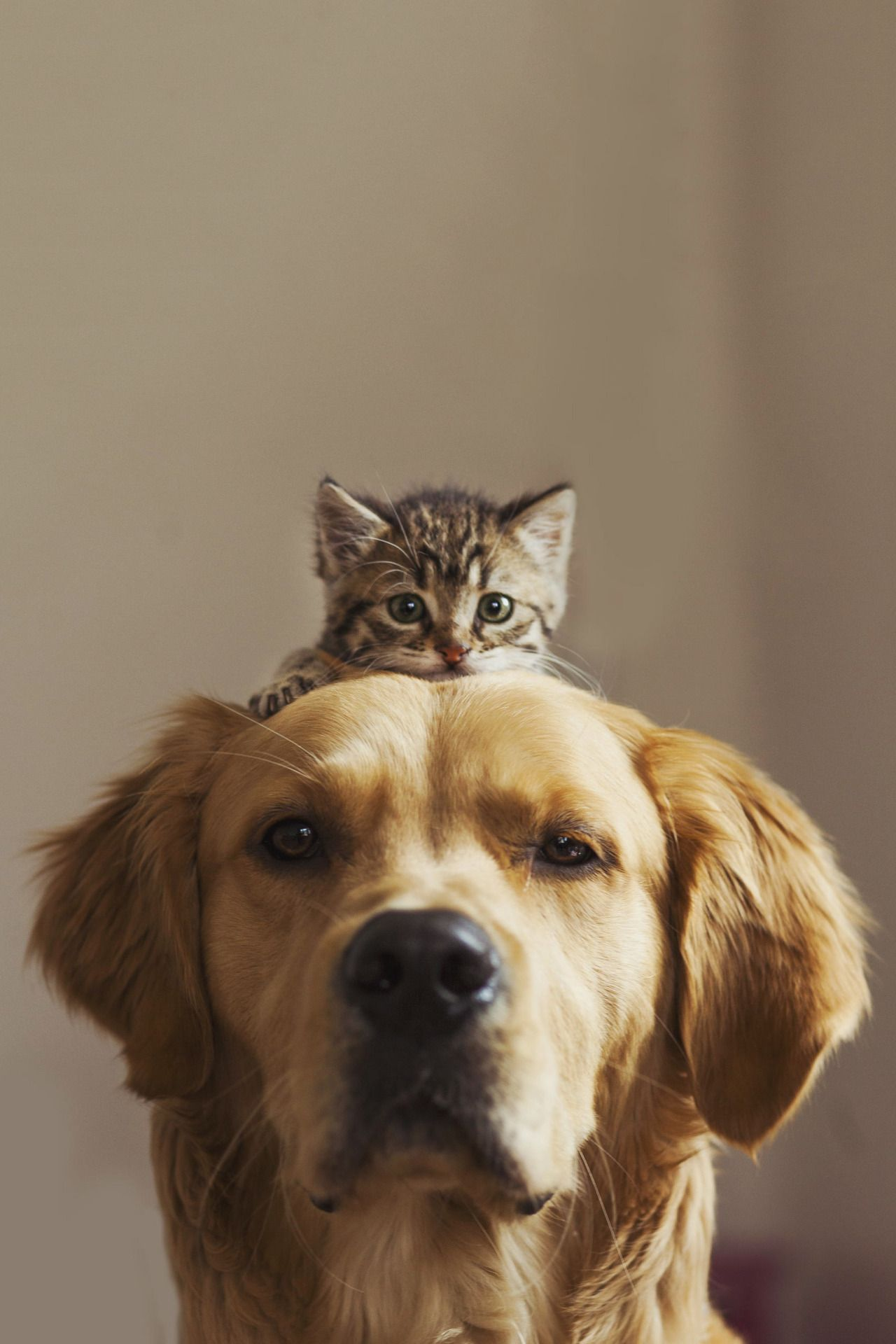 adorable buddies! sitoutside:Brotherhood