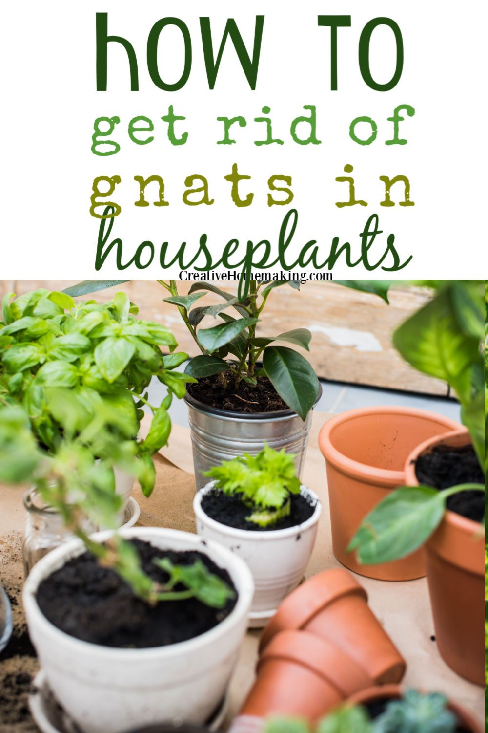 ae7a53b105d1ac312d6fc0d5b008db63 - How To Get Rid Of Gnats On Indoor House Plants