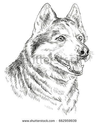 Vector Portrait Of Siberian Husky In Black Color Hand Drawing