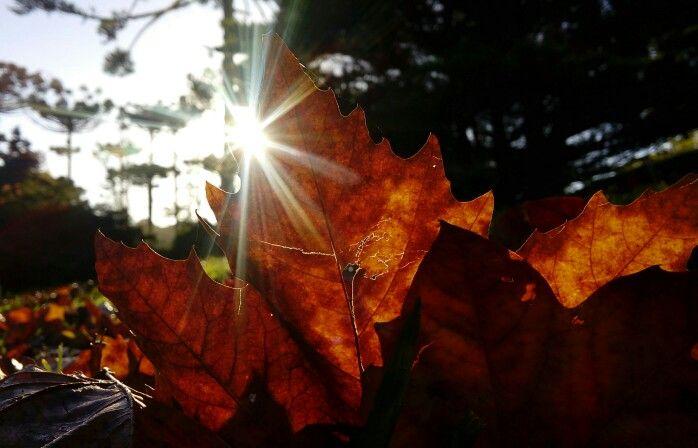 Outono 2015!!!Jardim Botânico Faxinal do Céu!!!
