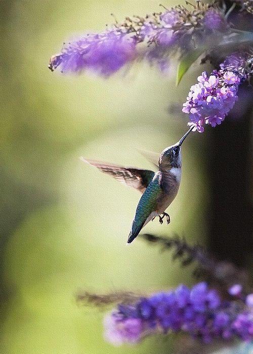 Hummingbirdie!!