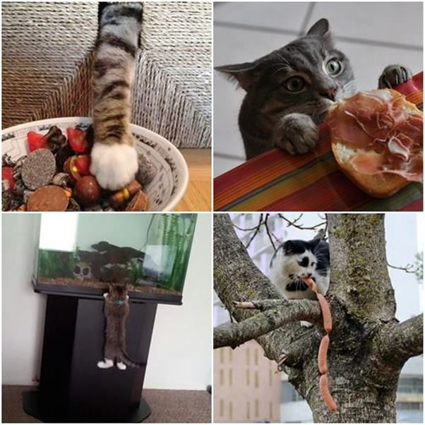 Cats and their mischief, funny pictures, playful cats caught in the act