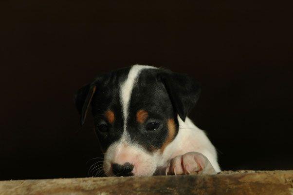 Hundefotos Hochzeitsfotografie Tierfotografie Babyfotografie Und Portraitfotografie Im Kreis Harburg Hamburg Schle Hunde Fotos Hundefotos Tierfotografie