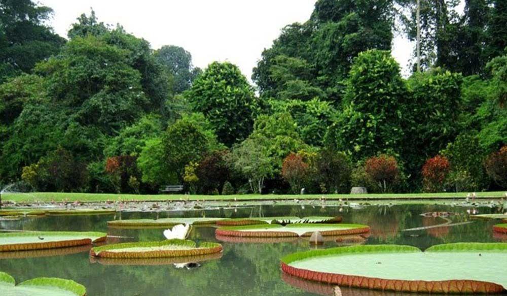 Kebun Raya Bogor Mobil