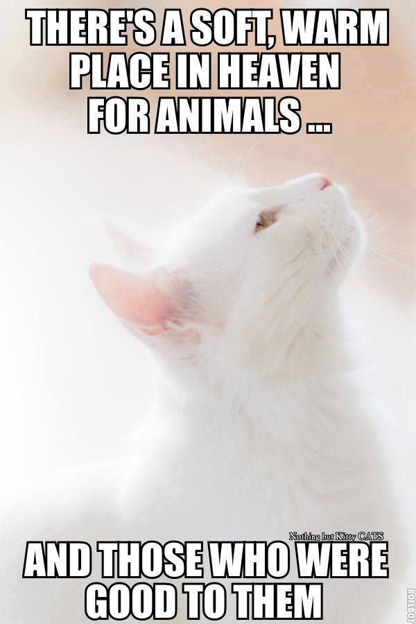 Cats Paradise Timeline Photos Crazy Cats Cat Quotes Cats And Kittens