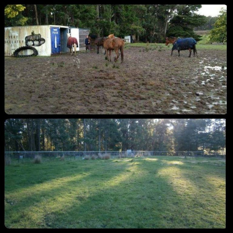 Equicentral Horse Keeping System Horses, Horse care