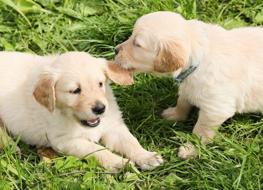 Buy pet dog supplies and accessories online plus gifts