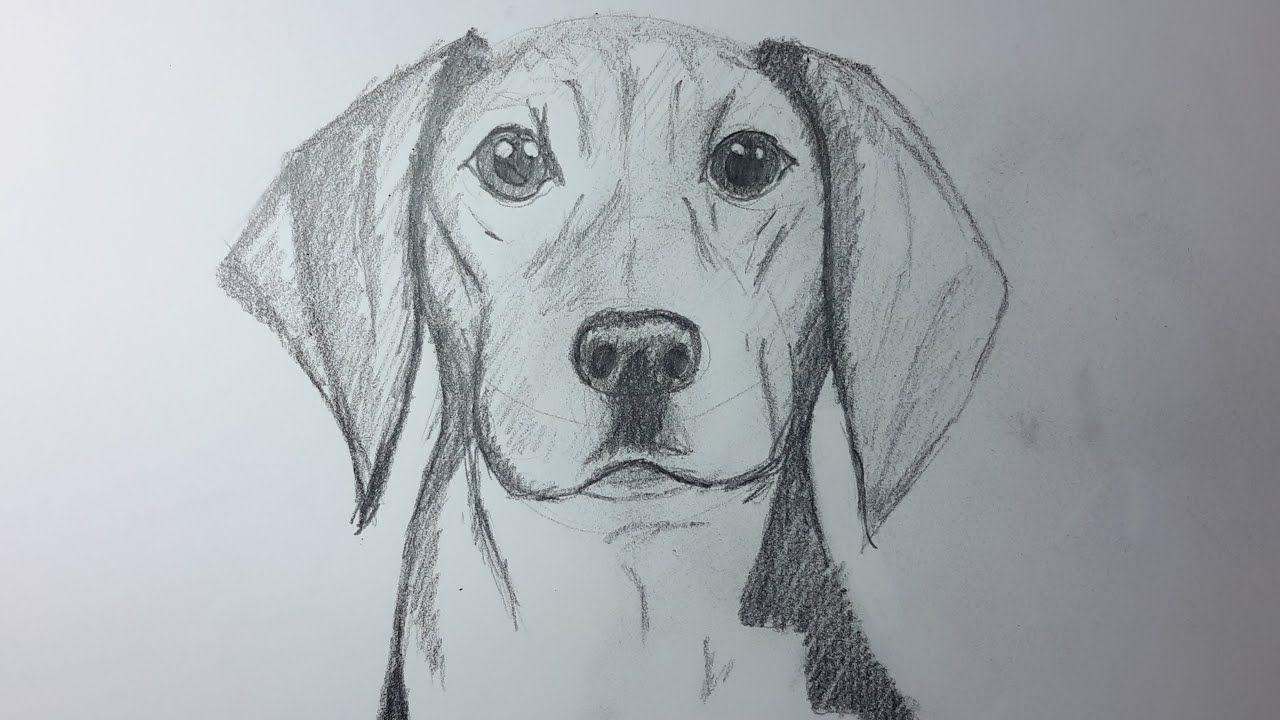 Photo of CÓMO DIBUJAR UN PERRO PASO A PASO REALISTA | Cómo dibujar un perro realista