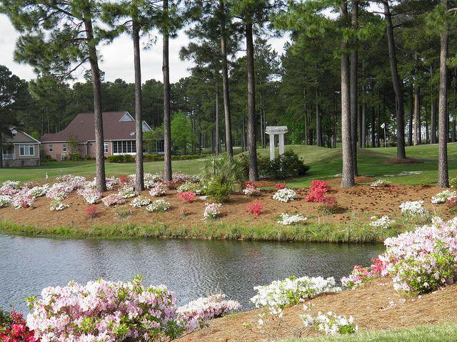 P4158477 by brunswickvillas, via Flickr Golf vacations