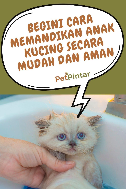 Memandikan Anak Kucing : memandikan, kucing, Begini, Memandikan, Kucing, Secara, Mudah, Kucing,, Hewan, Peliharaan