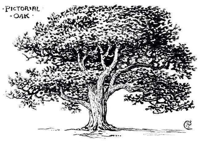 Pin De Andrea White En Trees Arbol A Lapiz Paisajes Arboles